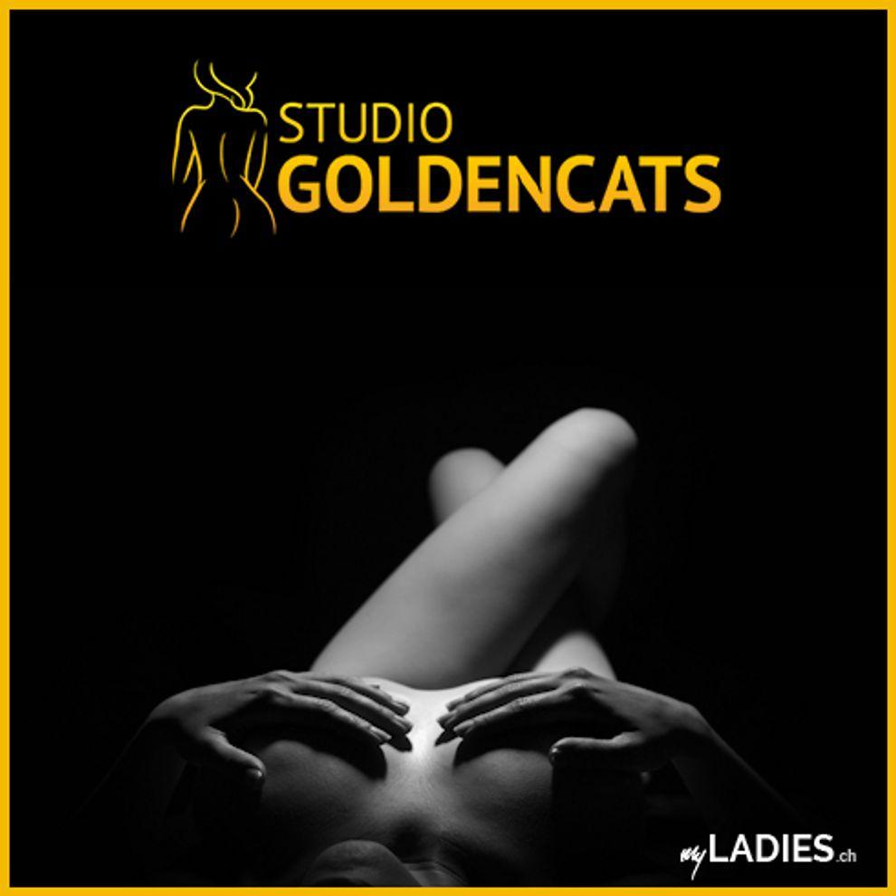 Studio Goldencats / Bild 12