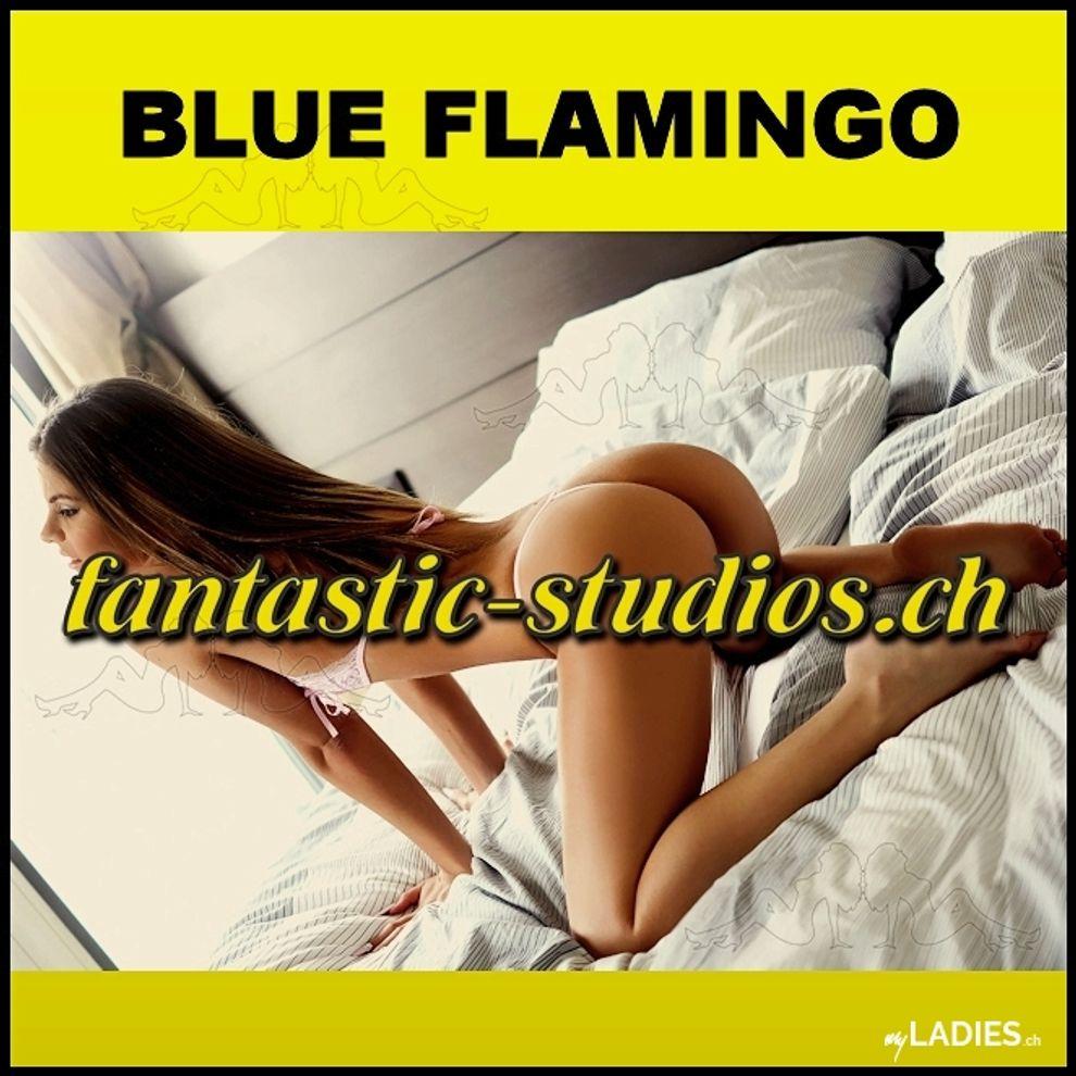 BLUE FLAMINGO / Bild 27